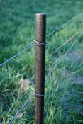 PasturePro 1 1/4in x 66in ProLine Fence Post